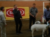Best In Show J-lunds Neptun 2a AG TEXEL