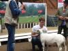 Helander Texel 2017